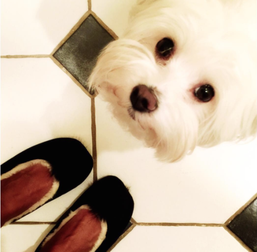 Boden Velvet slippers